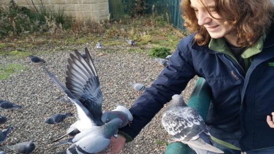 Caloan Feeding Birds Had